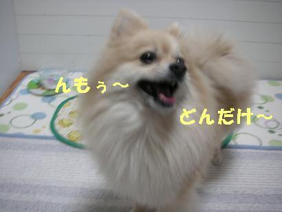 c0179136_2123068.jpg