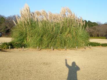 SUN  28  DECEMBER  2008_a0099744_11114650.jpg