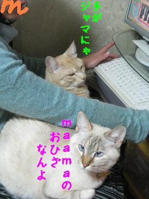 b0151748_1956368.jpg