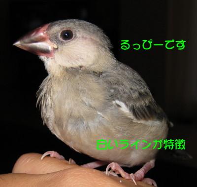 b0158061_2141622.jpg