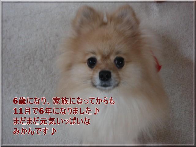 b0078073_1154383.jpg