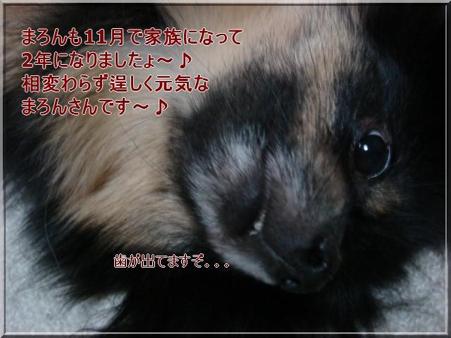 b0078073_11571969.jpg