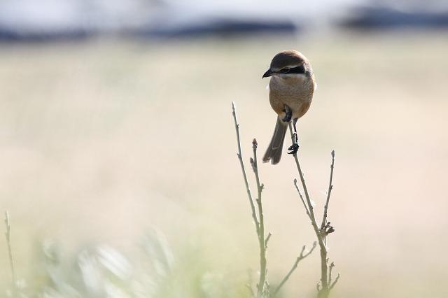 ★珍しい鳥は撮っていません・・・(^^;。_e0046474_1853248.jpg