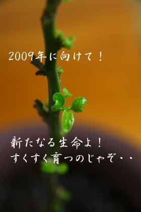 b0105081_16164122.jpg