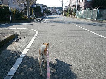 犬との生活で思うこと_d0020309_12315883.jpg