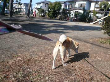 犬との生活で思うこと_d0020309_12323070.jpg