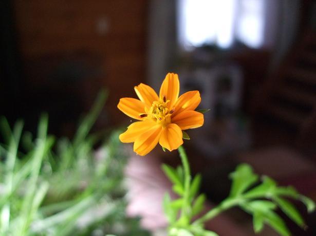 賑やかになった我が家と開花第一号_e0012815_2354194.jpg