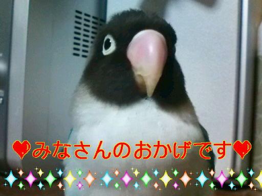 f0126418_1640568.jpg