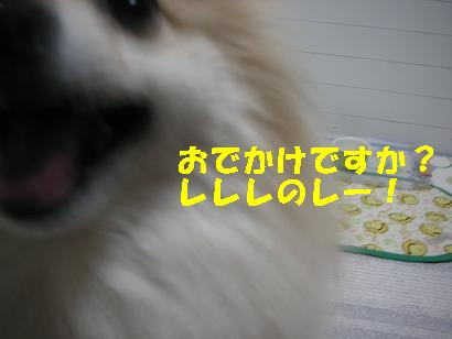 c0179136_2039131.jpg