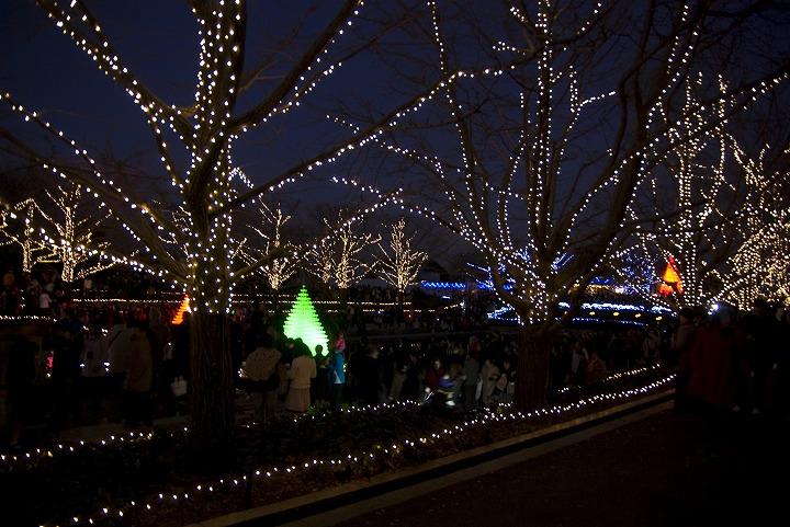 昭和記念公園のウインタービスタイルミネーション_e0000746_2051208.jpg