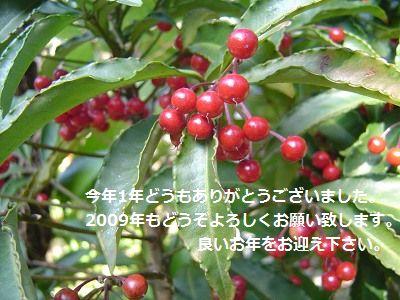 e0032665_196553.jpg