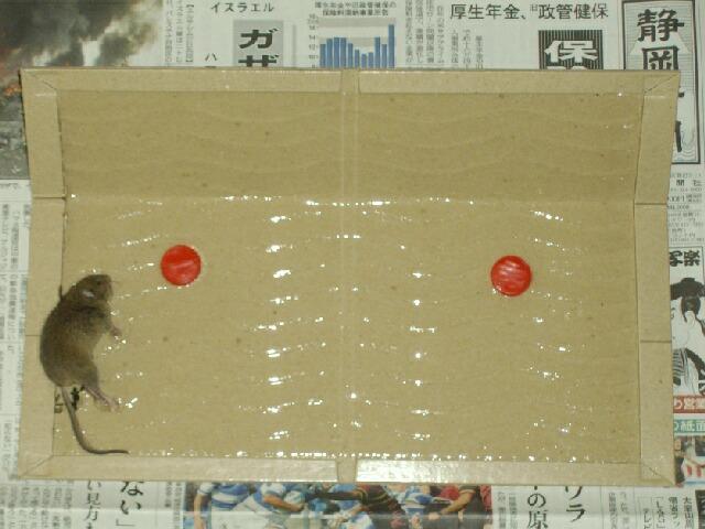 ノビリスの鉢増しと株分け_f0018078_1755670.jpg