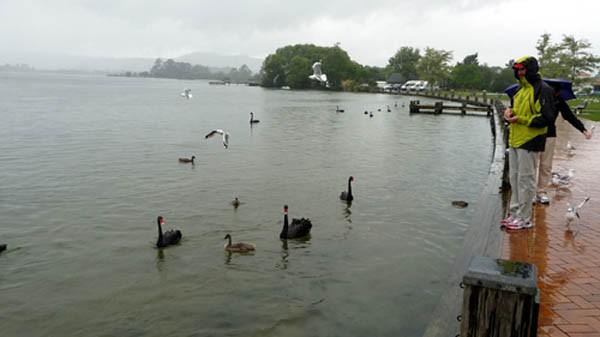 雨降って・・・、泉湧くハムラナ_e0133780_1713859.jpg