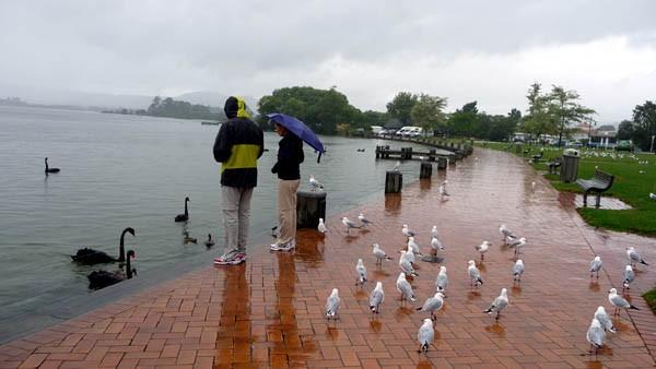雨降って・・・、泉湧くハムラナ_e0133780_17154310.jpg