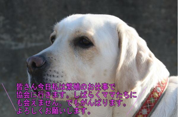 b0136683_157641.jpg