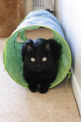 トンネル小娘