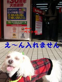 f0145192_1641399.jpg