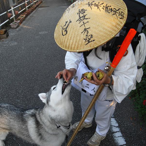 11月21日 おへんろ11日め by GX100_c0049299_19261677.jpg