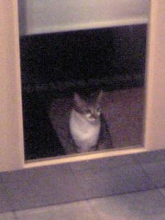 猫の恋_d0003502_22565397.jpg