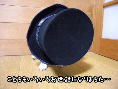 f0129214_16143842.jpg