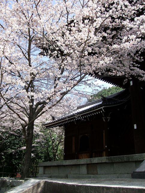 「桜情報・・・京都・知恩院」_d0133024_14393550.jpg