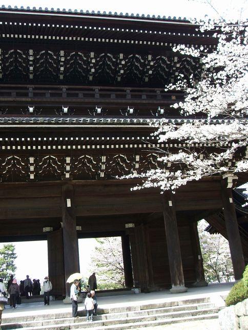 「桜情報・・・京都・知恩院」_d0133024_14395219.jpg