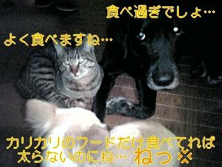 忘年会_f0148927_1121144.jpg