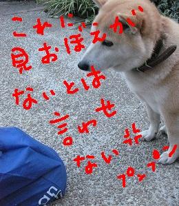 f0023634_144633.jpg