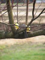 鳥がいっぱいくるので_b0115652_23223311.jpg