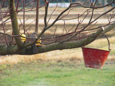 鳥がいっぱいくるので_b0115652_23225725.jpg