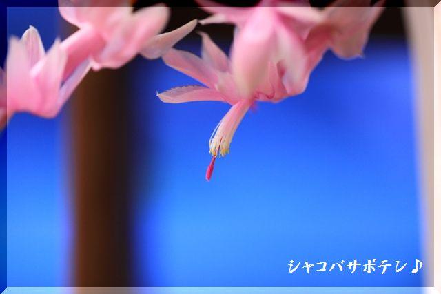 2008 レンズの試し撮り~♪_c0134862_21461013.jpg