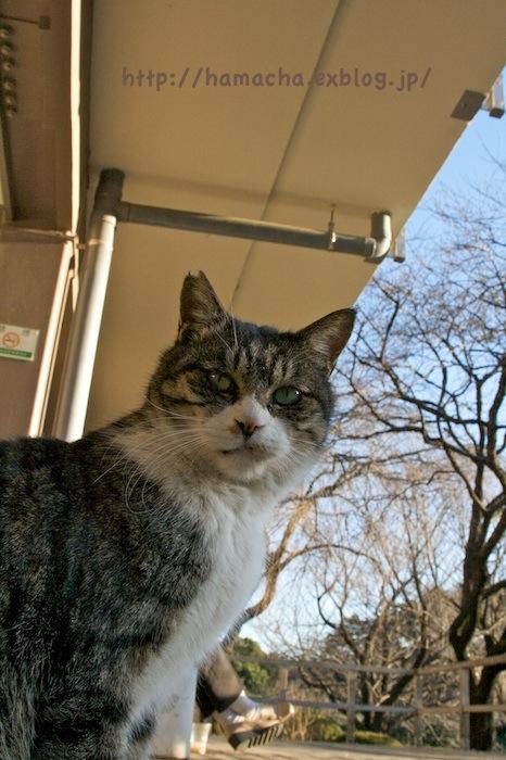 Cats at Shinjyukugyoen_c0158775_20415684.jpg