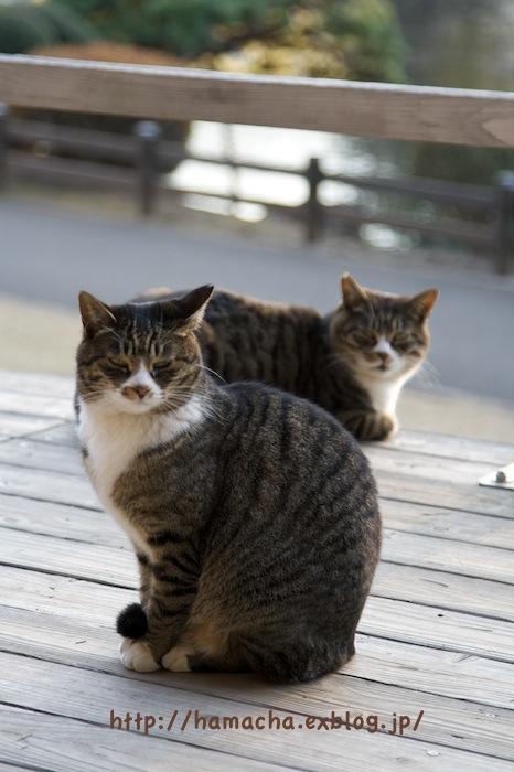 Cats at Shinjyukugyoen_c0158775_2043150.jpg