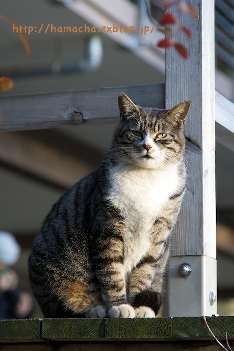 Cats at Shinjyukugyoen_c0158775_20434394.jpg