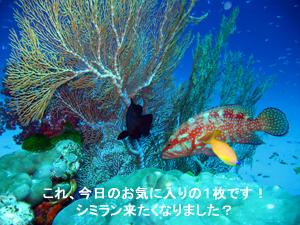 f0144385_6323846.jpg