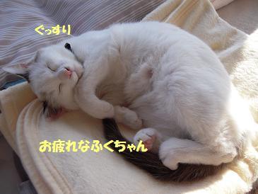 c0139488_22572041.jpg
