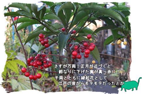 f0137096_0172932.jpg