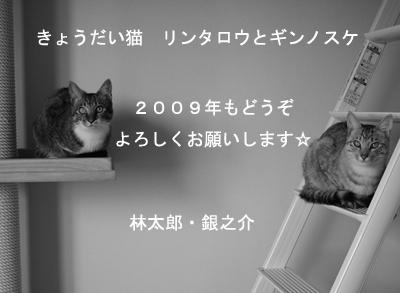 b0159509_2159323.jpg