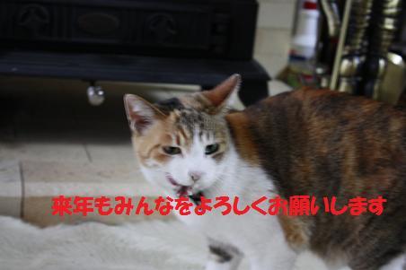 f0114128_2224150.jpg