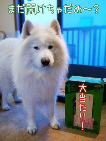 クローカ仕事納め_c0062832_18144532.jpg