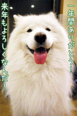 クローカ仕事納め_c0062832_18172785.jpg