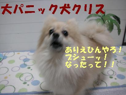 c0179136_4285065.jpg