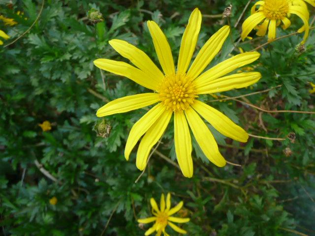 今 我が家で 咲いている花たちです♪_f0099147_0165621.jpg