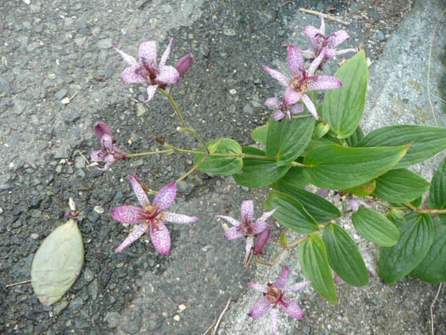 今 我が家で 咲いている花たちです♪_f0099147_0172626.jpg