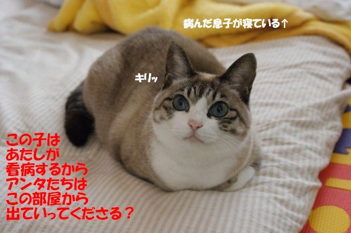 f0190851_1364191.jpg