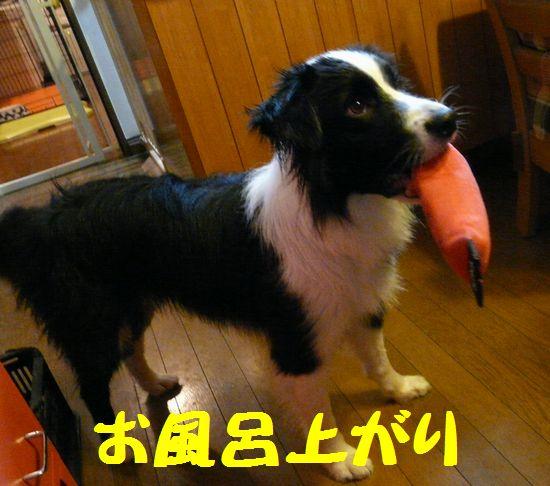 a0100564_1993124.jpg