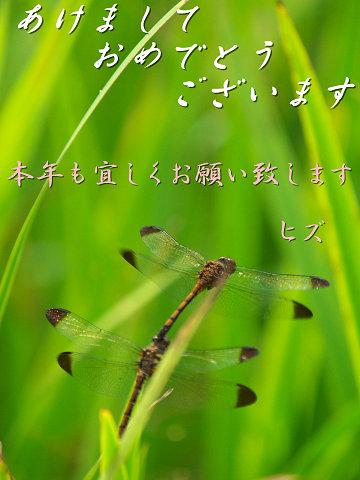 f0191564_20302452.jpg