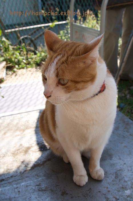 Cats at Enoshima_c0158775_18425329.jpg