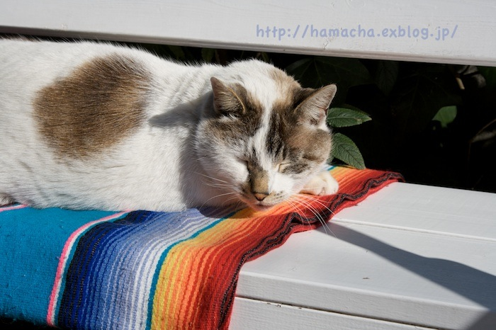 Cats at Enoshima_c0158775_18434147.jpg