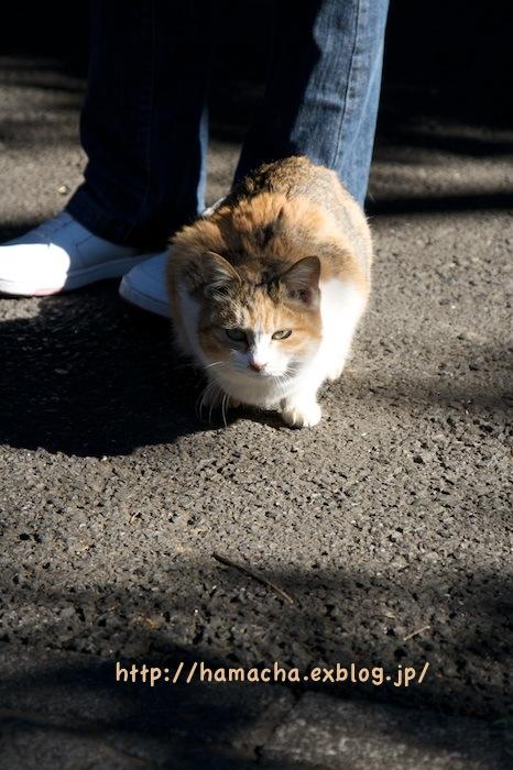 Cats at Enoshima_c0158775_1843633.jpg